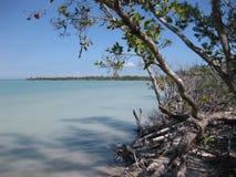 Arbres se reflétants au bord des eaux Images stock