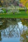 Arbres se reflétants d'étang de miroir au printemps Photo libre de droits