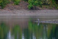 Arbres se reflétants de rivière et ciel nuageux photographie stock libre de droits