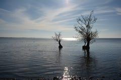 Arbres se reposant dans l'eau Photographie stock