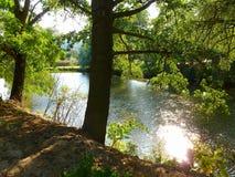 Arbres se tenant à côté d'une rivière Photographie stock libre de droits