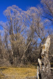 arbres secs Photos stock