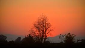 Arbres secs après coucher du soleil photo stock