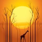 Arbres secs dans le coucher du soleil Illustration Stock