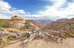 Arbres secs en parc national de Canyonlands Photos stock