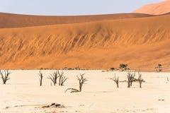 Arbres secs morts éloignés de vallée de DeadVlei au désert de Namib Image stock