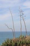 Arbres secs sur une falaise avec la mer et le ciel à l'arrière-plan Photographie stock libre de droits