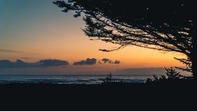 Arbres silhouettés au coucher du soleil Images libres de droits