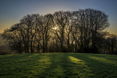 Arbres silhouettés au lever de soleil dans les domaines, les Cornouailles, R-U Photographie stock libre de droits