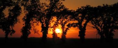 Arbres silhouettés avec le coucher du soleil de prairie Photographie stock