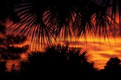 Arbres silhouettés contre le coucher du soleil Photo libre de droits