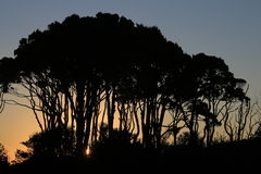 Arbres silhouettés contre le coucher du soleil Photos stock