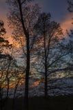 Arbres silhouettés, coucher du soleil Images stock