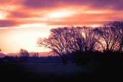Arbres silhouettés d'hiver contre un ciel dramatique de soirée Image stock
