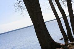 Arbres silhouettés de rive Photographie stock