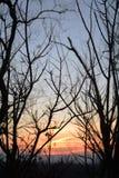 Arbres silhouettés sans feuilles à l'arrière-plan crépusculaire, gradient de couleur photographie stock