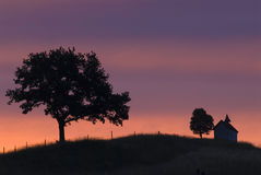 Arbres silhouettés sur l'horizon Photo stock