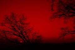 Arbres silhouettés sur un coucher du soleil rouge Images stock