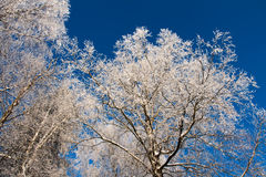 Arbres Snow-covered Photographie stock
