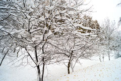Arbres Snow-covered Photo stock