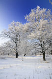 Arbres Snow-covered en hiver photographie stock libre de droits