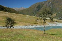 Arbres solitaires à la rivière de Matukituki photos libres de droits