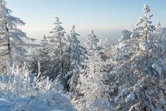 Arbres sous la chute de neige importante Photographie stock libre de droits