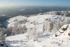 Arbres sous la chute de neige importante Images libres de droits