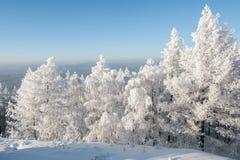 Arbres sous la chute de neige importante Photos libres de droits