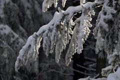 Arbres sous la neige Image stock
