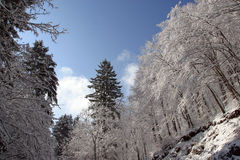 Arbres sous la neige Images stock