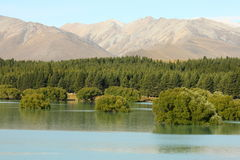 Arbres submergés au lac Tekapo Photo stock