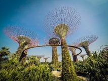 Arbres superbes à Singapour photo stock
