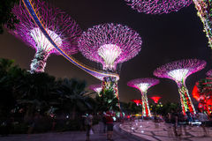 Arbres superbes aux jardins de Singapour par la baie Photo stock