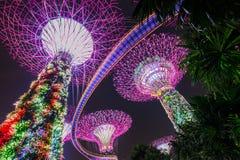 Arbres superbes aux jardins de Singapour par la baie Photographie stock libre de droits