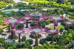 Arbres superbes aux jardins par la baie à Singapour Image stock