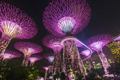 Arbres superbes aux jardins par la baie à Singapour Images stock