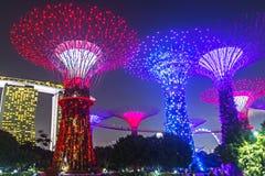 Arbres superbes aux jardins par la baie à Singapour Photo libre de droits