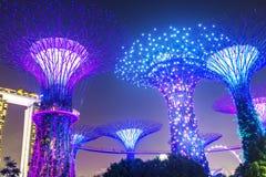Arbres superbes aux jardins par la baie à Singapour Photographie stock libre de droits