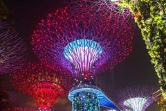 Arbres superbes aux jardins par la baie à Singapour Image libre de droits