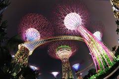 Arbres superbes dans les jardins par le compartiment Singapour Image stock