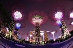 Arbres superbes dans les jardins par le compartiment Singapour Photos stock