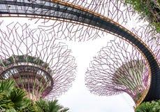 Arbres superbes de Singapour Photo libre de droits