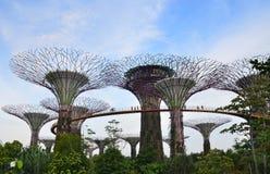 Arbres superbes, Singapour Photographie stock libre de droits