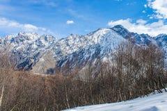 arbres sur des montagnes Photographie stock libre de droits