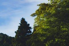 Arbres sur des montagnes de LUSHAN Photo stock