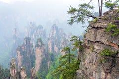 Arbres sur des roches en parc national de Zhangjiajie dans Hunan, Chine Photographie stock libre de droits