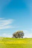 Arbres sur l'herbe verte dans la verticale Photos libres de droits