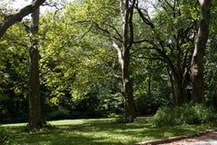 Arbres sur l'herbe verte sous la nuance Image libre de droits
