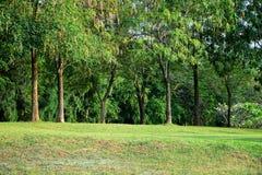 Arbres sur la colline en parc Photo libre de droits